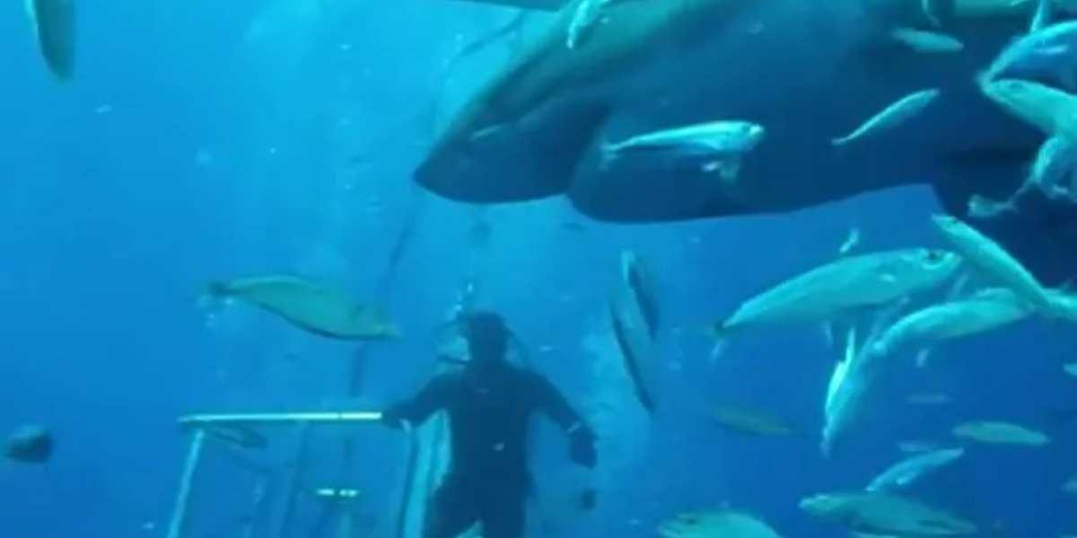 tiburon deep blue video fotos buzos
